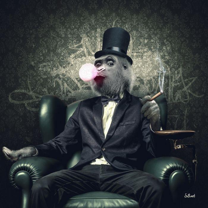 Singe cigare