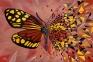 Butterfly Effect Ruby